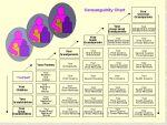 Cosanguinity Chart